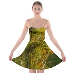 Dragonfly Dragonfly Wing Insect Strapless Bra Top Dress