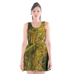 Dragonfly Dragonfly Wing Insect Scoop Neck Skater Dress