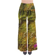 Dragonfly Dragonfly Wing Insect Pants