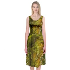 Dragonfly Dragonfly Wing Insect Midi Sleeveless Dress