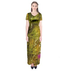 Dragonfly Dragonfly Wing Insect Short Sleeve Maxi Dress