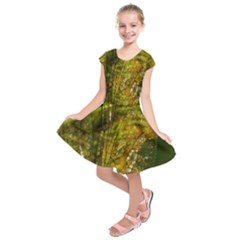 Dragonfly Dragonfly Wing Insect Kids  Short Sleeve Dress