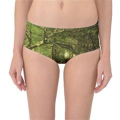Red Deer Deer Roe Deer Antler Mid Waist Bikini Bottoms