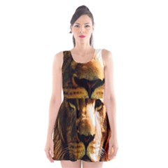 Lion  Scoop Neck Skater Dress