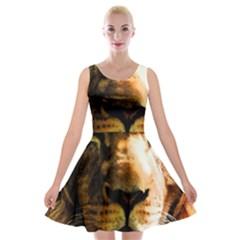 Lion  Velvet Skater Dress