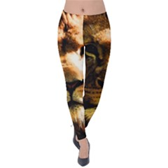 Lion  Velvet Leggings
