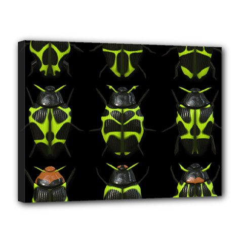Beetles Insects Bugs Canvas 16  x 12