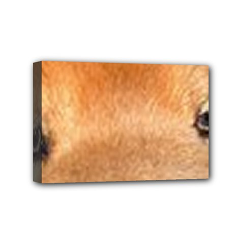 Chow Chow Eyes Mini Canvas 6  x 4