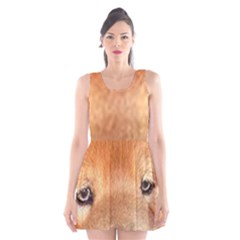Chow Chow Eyes Scoop Neck Skater Dress