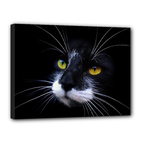 Face Black Cat Canvas 16  x 12