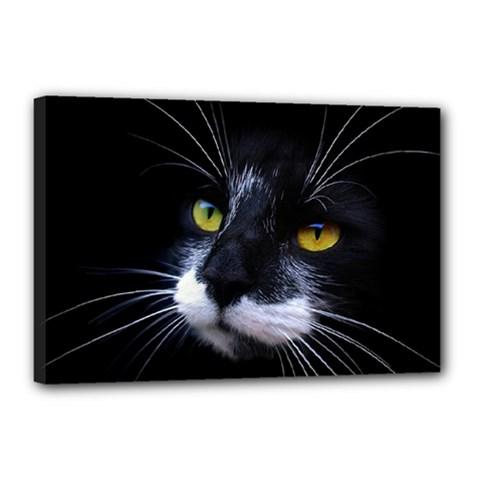 Face Black Cat Canvas 18  x 12