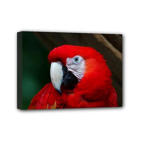 Scarlet Macaw Bird Mini Canvas 7  x 5