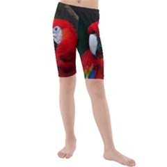 Scarlet Macaw Bird Kids  Mid Length Swim Shorts