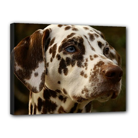 Dalmatian Liver Canvas 16  x 12