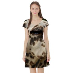 Dalmatian Liver Short Sleeve Skater Dress