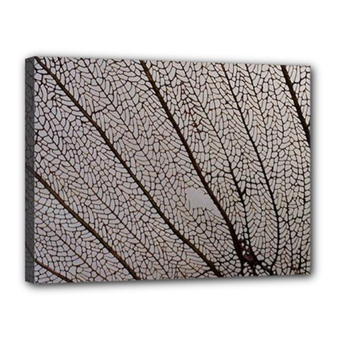 Sea Fan Coral Intricate Patterns Canvas 16  x 12
