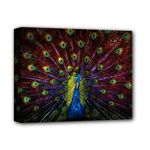 Beautiful Peacock Feather Deluxe Canvas 14  x 11