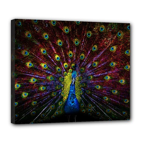Beautiful Peacock Feather Deluxe Canvas 24  x 20