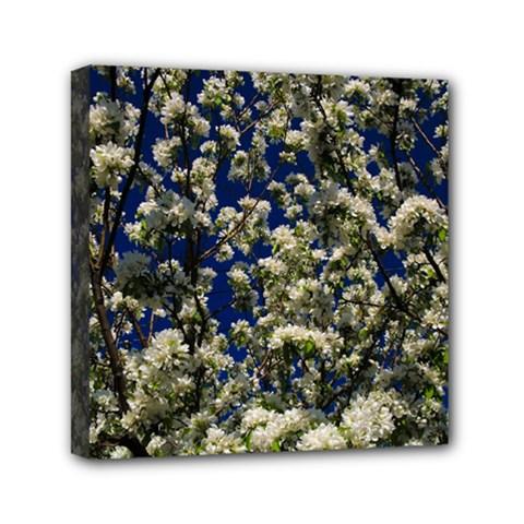 Floral Skies Mini Canvas 6  x 6