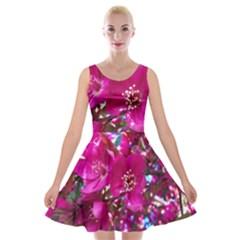 Pretty In Fuchsia 2 Velvet Skater Dress