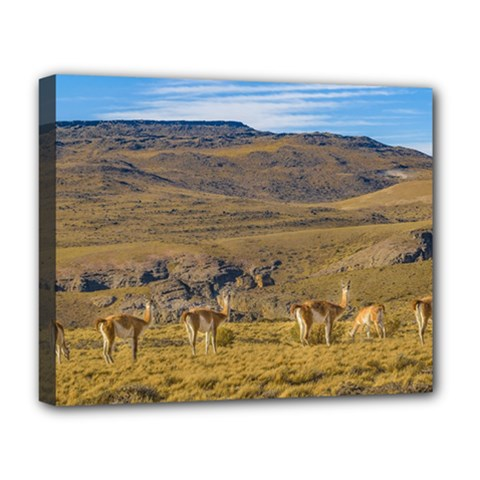 Group Of Vicunas At Patagonian Landscape, Argentina Deluxe Canvas 20  x 16