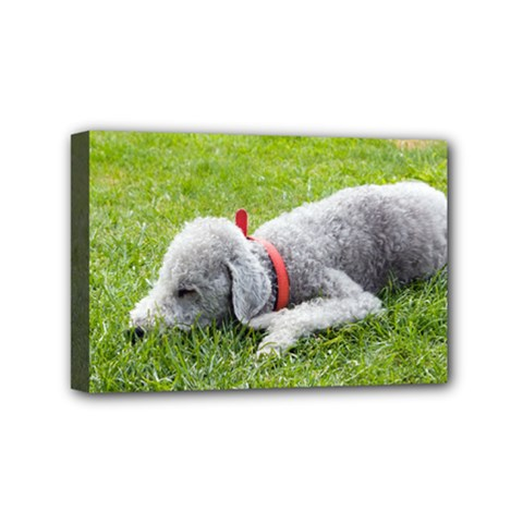 Bedlington Terrier Sleeping Mini Canvas 6  x 4