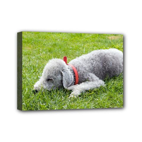 Bedlington Terrier Sleeping Mini Canvas 7  x 5