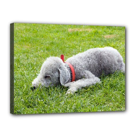 Bedlington Terrier Sleeping Canvas 16  x 12