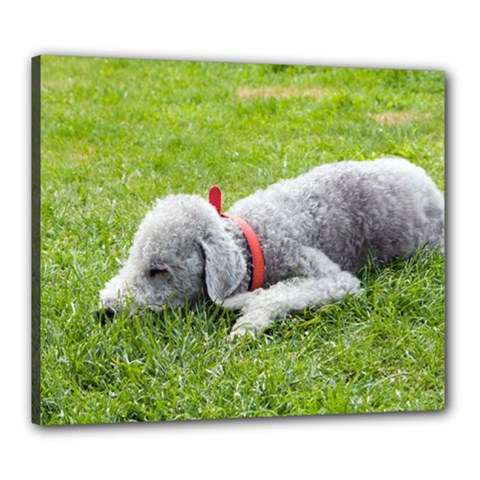 Bedlington Terrier Sleeping Canvas 24  x 20
