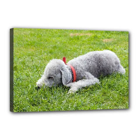 Bedlington Terrier Sleeping Canvas 18  x 12