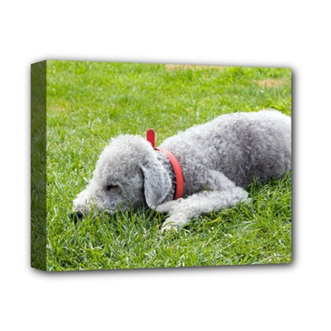 Bedlington Terrier Sleeping Deluxe Canvas 14  x 11