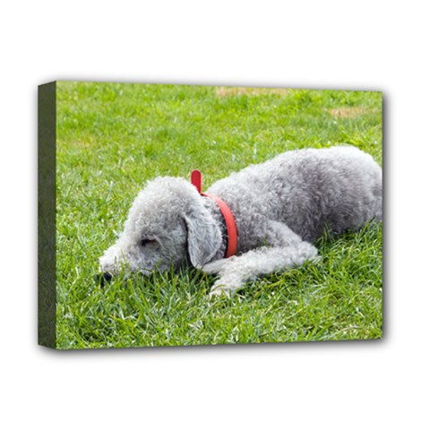 Bedlington Terrier Sleeping Deluxe Canvas 16  x 12