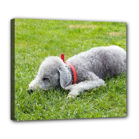 Bedlington Terrier Sleeping Deluxe Canvas 24  x 20