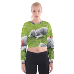 Bedlington Terrier Sleeping Cropped Sweatshirt