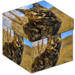 Adult Wild Cat Sitting and Watching Storage Stool 12