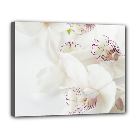 Orchids Flowers White Background Canvas 14  x 11