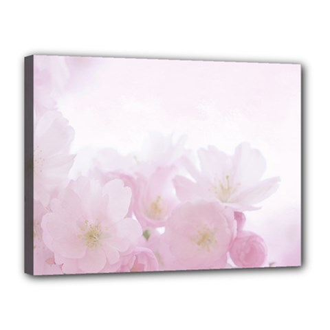 Pink Blossom Bloom Spring Romantic Canvas 16  x 12
