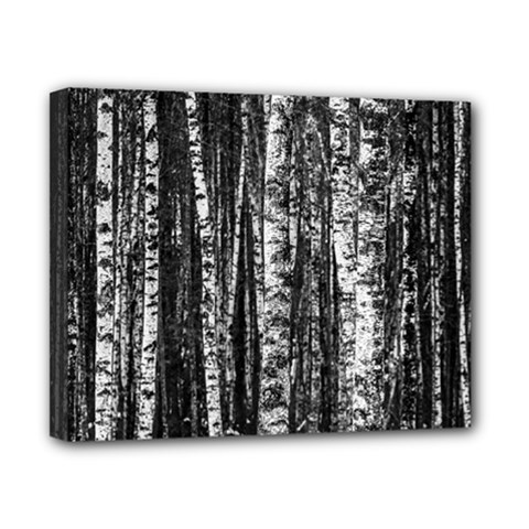Birch Forest Trees Wood Natural Canvas 10  x 8