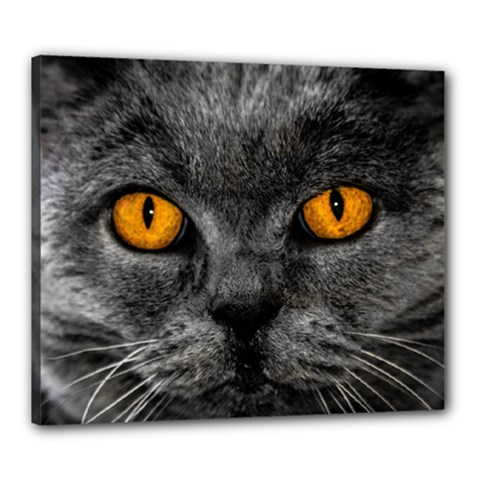 Cat Eyes Background Image Hypnosis Canvas 24  x 20