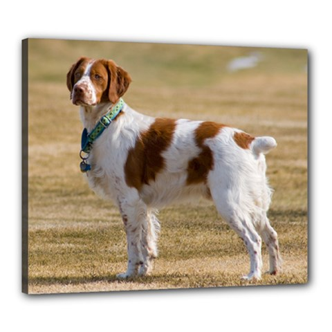 Brittany Spaniel Full Canvas 24  x 20