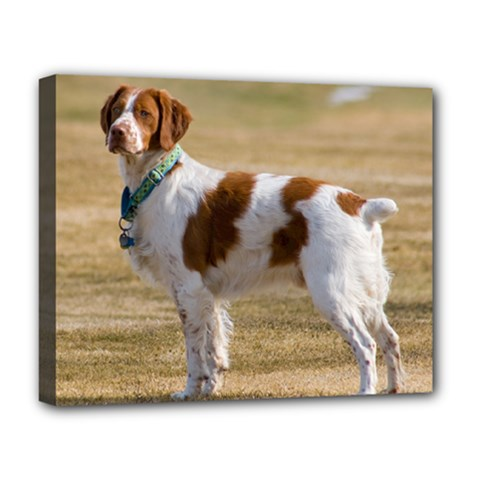 Brittany Spaniel Full Deluxe Canvas 20  x 16
