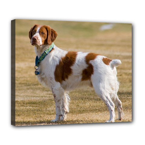 Brittany Spaniel Full Deluxe Canvas 24  x 20