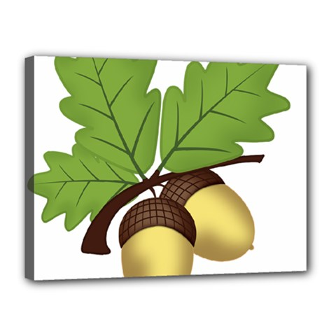 Acorn Hazelnuts Nature Forest Canvas 16  X 12