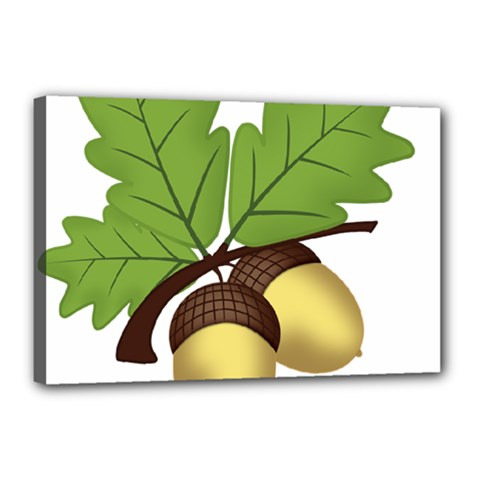 Acorn Hazelnuts Nature Forest Canvas 18  X 12