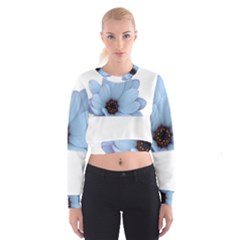 Daisy Flower Floral Plant Summer Cropped Sweatshirt