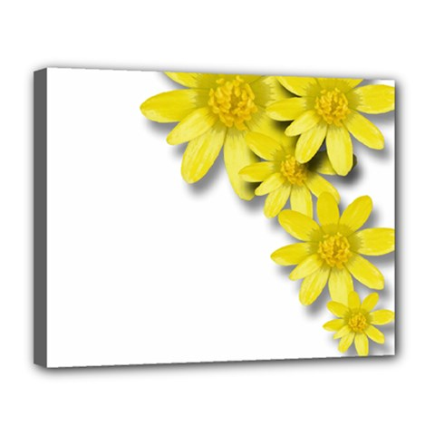 Flowers Spring Yellow Spring Onion Canvas 14  X 11