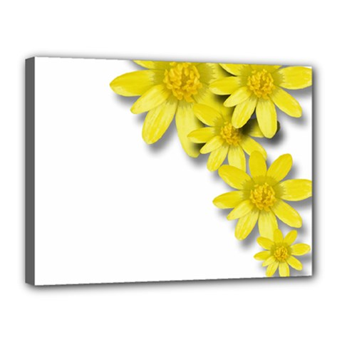 Flowers Spring Yellow Spring Onion Canvas 16  X 12