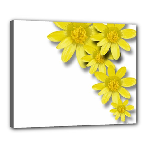 Flowers Spring Yellow Spring Onion Canvas 20  x 16