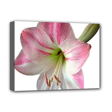 Flower Blossom Bloom Amaryllis Deluxe Canvas 16  x 12