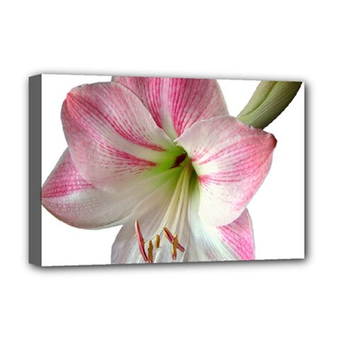 Flower Blossom Bloom Amaryllis Deluxe Canvas 18  X 12